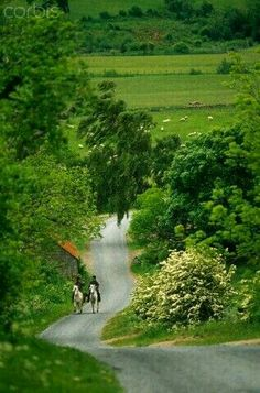 View top-quality stock photos of England Northumberland Harbottle Horseriding Along A Country Lane. Find premium, high-resolution stock photography at Getty Images. Beautiful World, Beautiful Places, Beautiful Pictures, Country Life, Country Roads, Country Living, Country Estate, Vie Simple, British Countryside