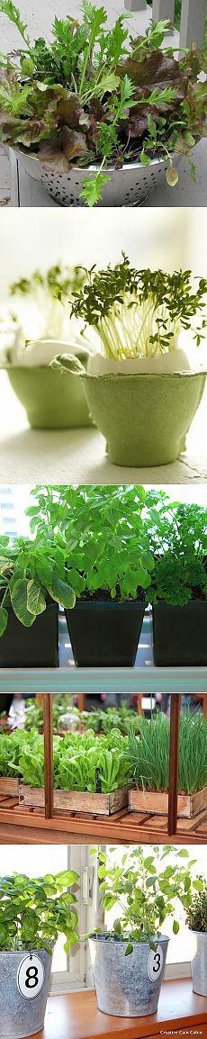 (+1) тема - Овощи и зелень, которые можно выращивать на подоконнике | МОЯ КВАРТИРА