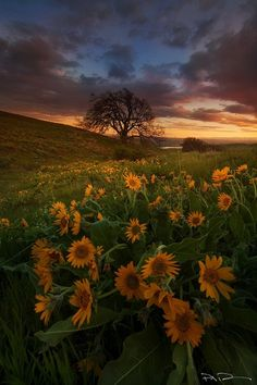 Spring Invasion by paul bowman on 500px