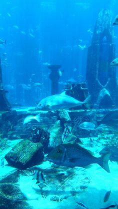 Atlantis Hotel,  Dubai Underwater Wallpaper, Abu Dhabi, Atlantis, Under The Sea, Dubai, Aquarium, Universe, Wallpapers, Places