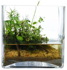 Wabi-Kusa Knowledge Base + Q/A - Aquascaping - Aquatic Plant Central