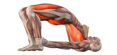 8 Quick Yoga Poses for Back Pain Relief & Belly Fat