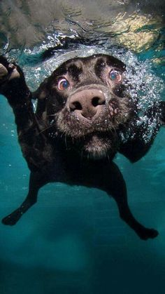 Jejeje cuando tu mejor amigo te persigue hasta cando te bañas