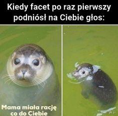 Wtf Funny, Funny Cute, Geek Meme, Funny Lyrics, Polish Memes, Weekend Humor, Best Memes Ever, Komodo Dragon, Funny Mems