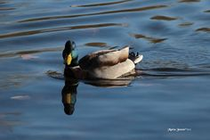 I love this duck photo so much that I chose it for my cover photo on FB.