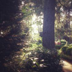 Secret sunlight