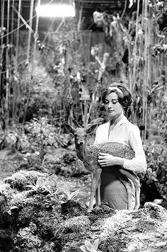 Audrey Hepburn feeding her pet deer 'Ip', 1958 by Bob Willoughby, via Flickr
