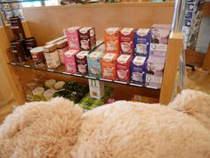 We found the bear nosing around looking at some of our herbal teas in our National Centre shop.