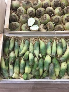 Cucumber, Zucchini, Vegetables, Food, Essen, Vegetable Recipes, Meals, Yemek, Veggies