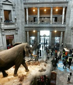 Smithsonian's Natural History Museum in Washington DC is better than Disneyland!