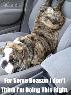 #cute dog #funny dog #dog #cute animals #puppy #puppies #doggie # doggy # doggies #dogs #funny dogs #funny puppies #funny puppy