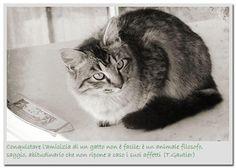 Conquistare l'amicizia di un gatto non è facile...