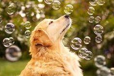 brincando de bolha