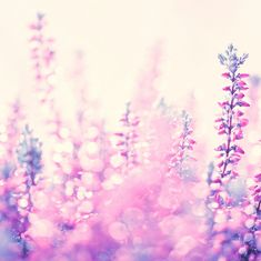 Dreamy flower photography by sweetheart*