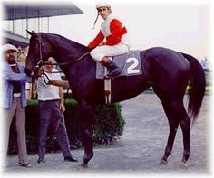 Ruffian ....one incredible mare! Sad ending to her life.  Thoroughbred mare.  Kentucky Derby winner