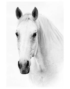 size: Stretched Canvas Print: Ghost Equus : Using advanced technology, we print the image directly onto canvas, stretch it onto support bars, and finish it with hand-painted edges and a protective coating. Exhibition, Painting Edges, Print Artist, Horse Art, Stretched Canvas Prints, Find Art, Giclee Print, Art Prints, Artwork