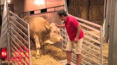 This bull has been chained and neglected his whole life...watch his reaction when he is rescued and freed to a sanctuary...