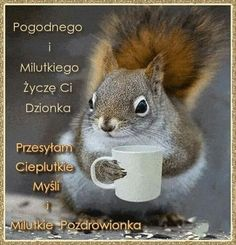 Weekend Humor, I Love Coffee, How To Know, Kittens Cutest, Motto, Squirrel, Good Morning, Haha, Funny