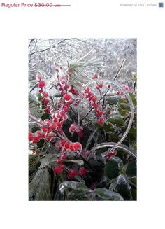 Ice Storm Frozen Red Winterberry 8 x 12 Fine by LovesParisStudio, $24.00