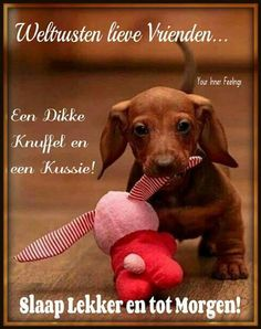 goede avond. Weigt Watchers, Learn Dutch, Dutch Quotes, Good Night Image, Working On It, Sweet Dreams, Animals And Pets, Animal Pictures, Good Morning