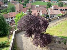 Saint-Jean-Pied-de-Port: Vue sur les toits de la ville depuis le site de la citadelle