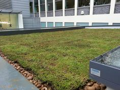 Eco Green Roofs! Another stunning roof! www.ecogreenroofs.co.uk