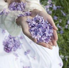 #AnaRosa #Lilacs                                                       …