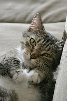 **CAT SNIP: More proof that cats are smarter than people? They don't smoke cigarettes. They are, however, susceptible to second-hand smoke. People who smoke in their homes are putting their cat at risk for cancer, asthma, and particularly feline lymphoma. Wise up and follow kitty's example.
