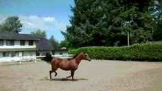 GIF A horse doing a ninja move Animals And Pets, Funny Animals, Cute Animals, Funny Animal Videos, Funny Animal Pictures, Ninja Moves, You Funny, Beautiful Horses, Airsoft