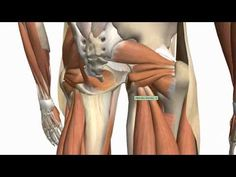 Probably the best anatomy tutorial out there.     Muscles of the Thigh and Gluteal Region - Part 1 - Anatomy Tutorial