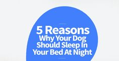 You may be wondering why your dog should sleep in your bed at night, here are some reasons that explain why they should do so.