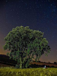 El árbol entre las espigas_054