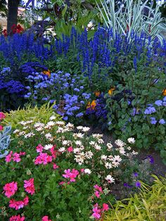 garden of blue, white and pink flowers by joybidge, via Flickr