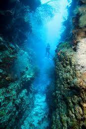 Canyon, Roatan, amazing and beautiful dive through narrow passages
