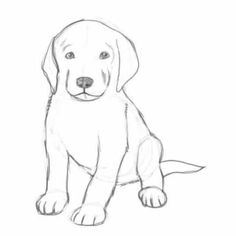 Dog Sketch Drawing Easy - How To Draw A Puppy Dieren Tekenen Eenvoudige Tekeningen Hond Drawings Of Puppies Puppy Sketch By Kitty Ham Animal Drawings Drawings Of Dogs Kelpie Do. Pencil Art Drawings, Easy Drawings, Animal Drawings, Drawing Sketches, Dog Drawings, Drawing Drawing, Daily Drawing, Sketching, Cute Puppies