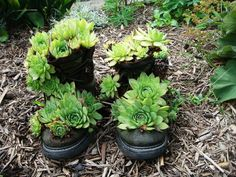 garden containers - Bing Images