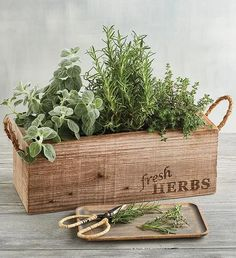 Shop the Herb Garden in Wooden Box and more flower & plant gifts available online from Harry & David. Herb Garden In Kitchen, Kitchen Herbs, Organic Horticulture, Organic Gardening, Gardening Vegetables, Urban Gardening, Container Gardening, Culture D'herbes, Crates