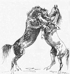 Fighting stallions. Charcoal