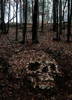 The Shadow Witch liked her presence to be known, so she made strange images and patterns on the forest floor