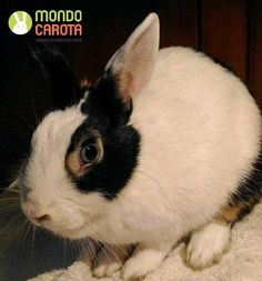 CACIOTTA CERCA FAMIGLIA  Per info scrivete a adozioni@mondocarota.it _____ #bunnylove #rabbits #pet #animallover #adoptdontshop #petsofinstagram #instabunny #adoption #rabbits_of_ig #rabbitgram #adorable #instarabbit #rabbit #bunnygram #pets #cute #animal #pets_of_instagram #bunny #animals #bunnies #petstagram #rabbitsofinstagram #petsagram