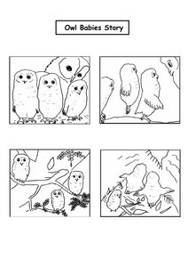 Owl babies sequencing task.doc