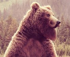 If bears had beards