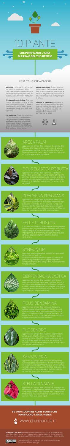 Piante che Purificano l'aria della tua casa o del tuo ufficio. Scoprile tutte su http://www.edendeifiori.it/piante-contro-inquinamento