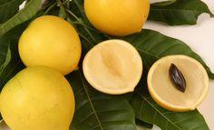 Sağlıklı Bitki Türleri - Ebu'l Meyvesi