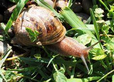 Il mondo in un giardino: Rimedi naturali anti lumache