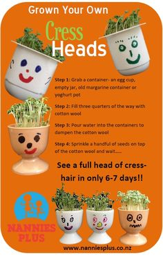 Grow Cress-Heads in 6-7 Days! Gardening is a great and fun way for children to learn about nature and self-sustainability. Watering, watching and waiting also requires caring and patience.