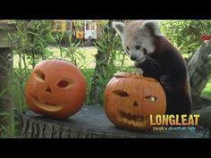 Animals can enjoy Halloween (too?).