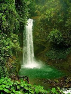 La Paz Waterfall, Rain forrest. Costa Rica