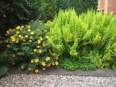 Cómo elegir arbustos para tu jardín