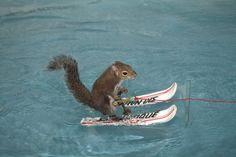 Augenblick mal! Was macht das Eichhörnchen auf Wasserskiern? - SPIEGEL ONLINE - einestages